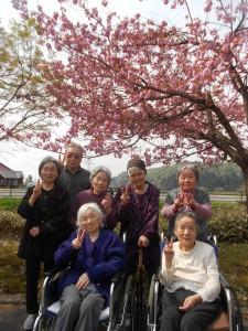 SK花見「キレイな桜だね」