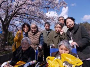 GH花見「青空に桜、映えますね~」